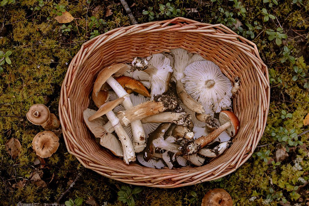 All the Types of Edible Mushrooms