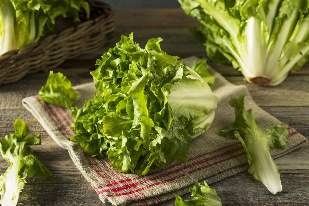 Want to Know Some Escarole Substitutes Here are About  7 of Them