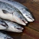 Trout vs Salmon: What's the Difference?